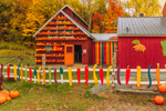 Colorful Animal Barn Adorned with Pumpkins at Pete's Greens Farm Market, Waterbury Center, Waterbury, VT