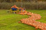 Blue Wagon with Pumpkins at Pete's Greens Farm Market, Waterbury Center, Waterbury, VT
