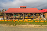 Pumpkin and Vegetable Stand at Hartshorn's Organic Farm in Fall, Waitsfield, VT