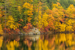 Fall Foliage Reflecting in Amherst Lake on Black River, Plymouth, VT