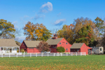 Red Barns in Fall, Coventry, CT