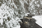 Snow-covered Conifer Forest along Scott Brook after Snowstorm, Royalston, MA