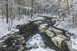 Quanduck Brook after Fresh Snowfall, Sterling, CT