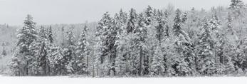 Snow-covered Conifer Forest at Edge of Gates Pond, Village of Jacksonville, Whitingham, VT