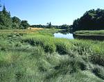 Deer Meadow Brook with Estuarine Salt Marsh Grasses