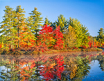 Fall Colors at Harvard Pond, Petersham, MA