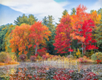Pond and Woodlands with Fall Foliage, North Common Meadow, Petersham, MA