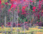 Fall Wetlands, Green Mountain National Forest, Woodford, VT