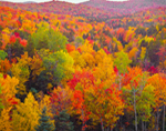 Overview of Spectacular Fall Colors, Green Mountain National Forest, Somerset, VT