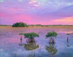 Red Mangroves and Distant Rain Storm at Sunset, Everglades National Park, FL