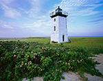 Long Point Light with Roses (Rosa rugosa)in Bloom