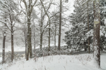 Woodlands along Millers River during Snowstorm, near Bearsden Conservation Area, Athol, MA