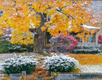 Front Yard with Early Snow on Fall Foliage, Athol, MA