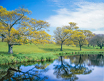 Oak Trees, Meadow, and Pond in Springtime on Turtle Brook Farm, Martha's Vineyard, Chilmark, MA