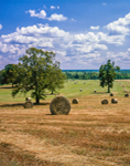Round Hay Bales in Field with Golden Light under Bright Blue Sky, Faulkner County, AR