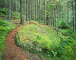 Trail Through Coastal Fog Forest, Crockett Cove Woods Preserve, Stonington, ME