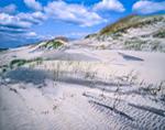 Sand Dunes at Pea Island National Wildlife Refuge, Cape Hatteras National Seashore, Outer Banks, Hatteras Island, NC