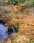 Salt Water Marsh in Winter, Cape Hatteras National Seashore, Outer Banks, Bodie Island, NC