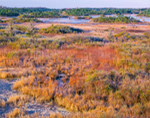 View of Chesser Prairie from Owls Roost Observation Tower, Okefenokee National Wildlife Refuge, GA