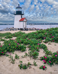 Brant Point Light with Roses (Rosa rugosa) in Bloom, Nantucket Harbor, Nantucket, MA