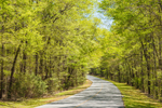 Country Road through Woodlands in Early Spring, Georgia Piedmont Region, Richard B. Russell State Park, Ruckersville, GA