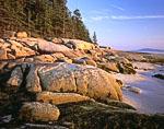 Spruce and Rocks along Western Shoreline of Saddleback Island