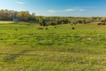 Rolling Green Hills and Cows in Pasture in Spring, Piedmont Region, Iredell County, Harmony, NC