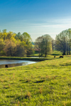 Cows Grazing in Green Pastures near Pond in Spring, Piedmont Region, Iredell County, Harmony, NC