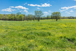 Field of Yellow Wildflowers and Grasses in Pasture in Early Spring, Georgia Piedmont Region, Elbert County, Elberton, GA