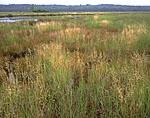 Northeast Creek through Fresh Meadow Marsh