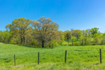 Green Rolling Hills and Trees in Farm Pastures in Spring, Piedmont Region, Jackson County, Pendergrass, GA