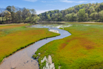 Stream Meandering through Cove off Tugaloo River near Hartwell Lake, Piedmont Region, Stephens County, Toccoa, GA