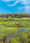 Small Pond and Wetlands off Tugaloo River in Spring, Piedmont Region, Oconee County, Westminster, SC
