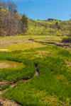 Rolling Hills and Gryer Branch off Tugaloo River and Hartwell Lake in Spring, Piedmont Region, Oconee County, Westminster, SC