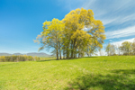 Green Pastures and Trees with Spring Foliage, Blue Ridge Mountains in Distance, Piedmont Region, Greenville County, Gowensville, SC