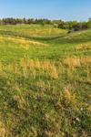 Rolling Green Hills and Fields in Spring, Piedmont Region, Albemarle County, Village of Hatton, Scottsville, VA