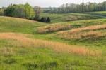 Orange Grasses in Rolling Green Hills and Fields in Spring, Piedmont Region, Albemarle County, Village of Hatton, Scottsville, VA