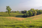 Orange Grasses in Rolling Green Hills and Pastures in Spring, Piedmont Region, Albemarle County, Village of Hatton, Scottsville, VA