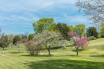 Flowering Dogwood and American Redbud Trees in Full Bloom in Spring, Piedmont Region, Orange County, Rapidan, VA
