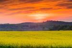 Spectacular Sunrise over Canola Fields in Full Bloom in Spring, Piedmont Region, Davie County, Mocksville, NC
