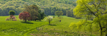 Rolling Green Pastures with Flowering Trees in Spring, Piedmont Region, Albemarle County, Barboursville, VA