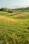 Orange Grasses in Rolling Green Hills and Fields in Spring, Piedmont Region, Albemarle County, Village of Hatton, Scottsville, VA