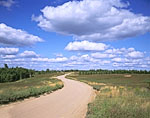 Road through Wild Blueberry Fields near Pineo Ridge