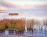 Rushes and Morning Fog on Lake Pleasant, Adirondack Mountains, Speculator, NY