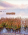 Rushes and Morning Fog on Lake Pleasant, Adirondack Mountains, Speculator, NY