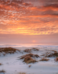 Sunrise over Atlantic Ocean and Dunes on Ocracoke Island, Cape Hatteras National Seashore, Outer Banks, Ocracoke Island, NC