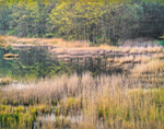 Freshwater Marsh in Spring, Guilford, CT