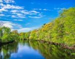 Spring Foliage in Woodlands along the Farmington River, Simsbury, CT