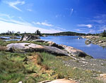 Salt Marsh Grasses and Rocks along Shoreline