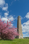 Flowering Cherry Trees and Groton Monument at Fort Griswold Battlefield State Park, Groton, CT